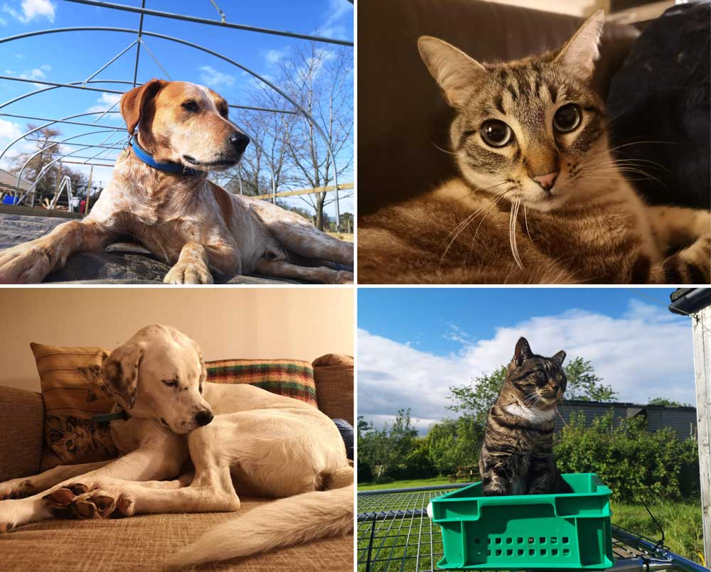 our dogs and cats