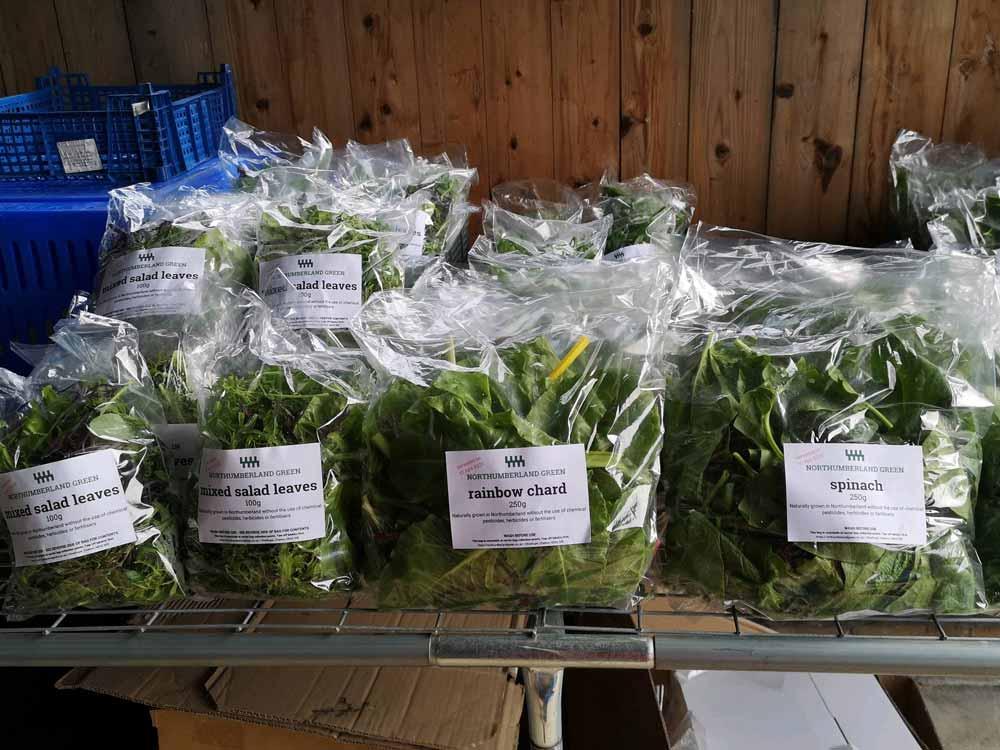salad leaves in bags