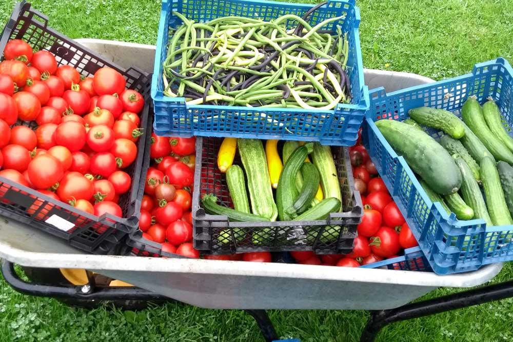 produce in wheelbarrow