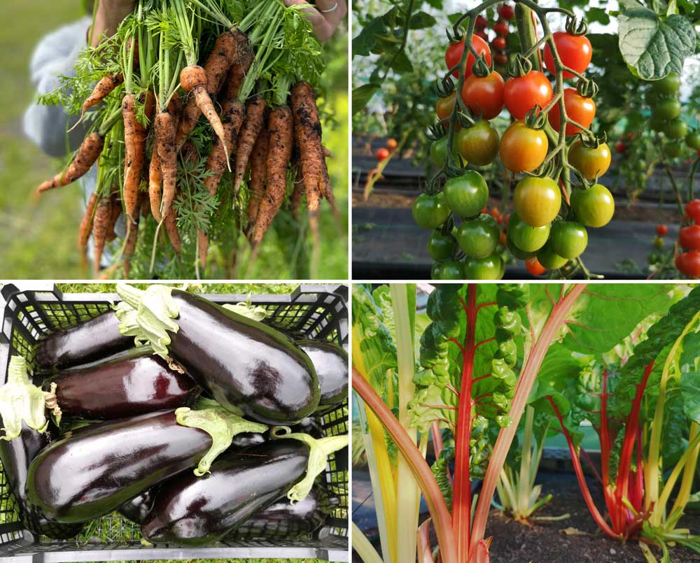 four types of vegetables