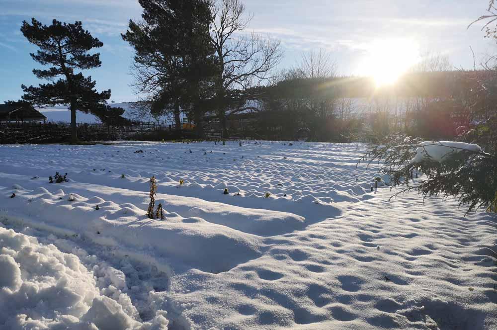 market garden in the snow